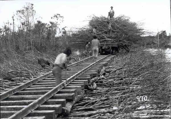 Assentamento de trilhos sobre estiva de galharia para passagem de trem de lastro, durante a construção da ferrovia Madeira-Mamoré